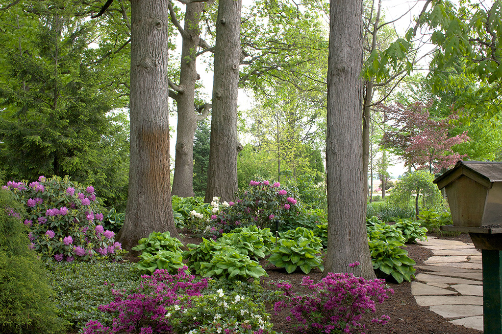 Elegance beauty rhododendron azalea smalls for Small area planting ideas