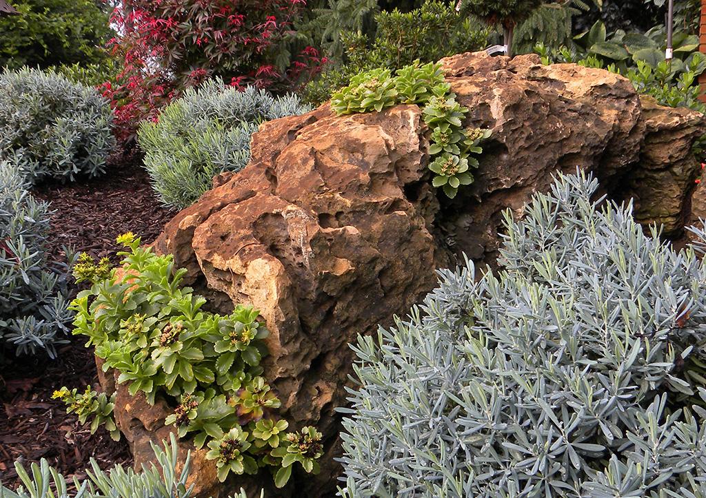 succulents-uncommon-plants-01