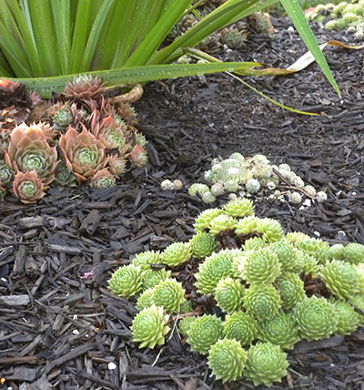 succulents-uncommon-plants-02