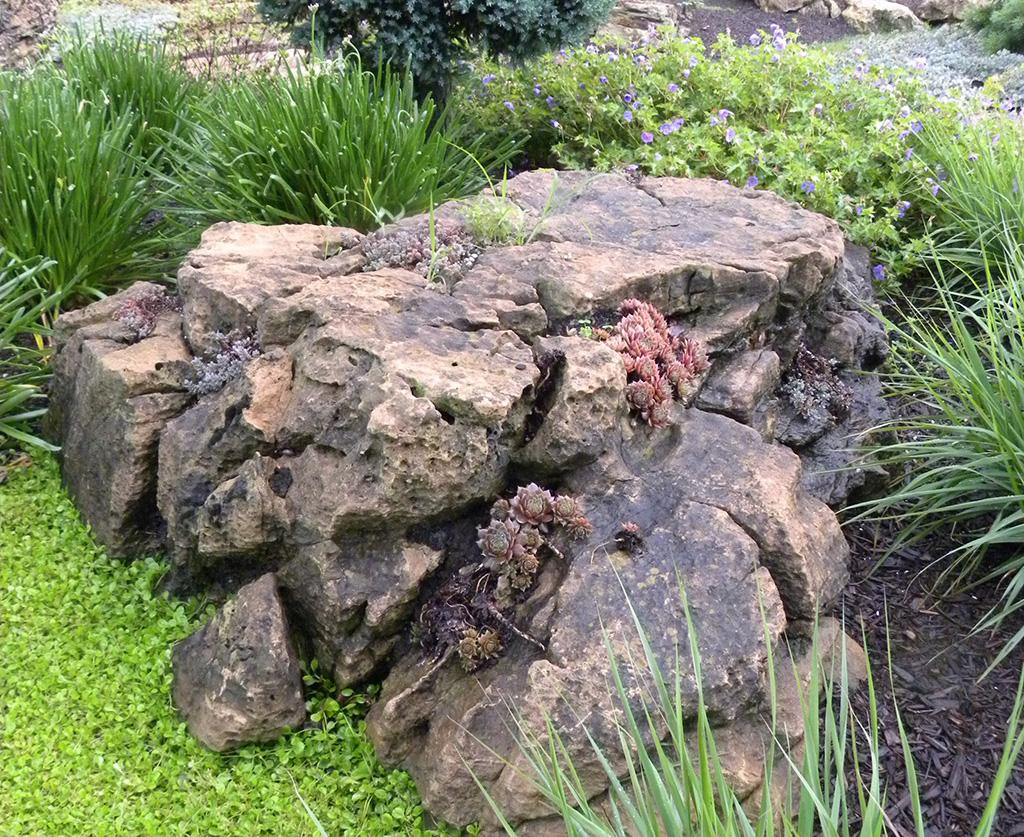 succulents-uncommon-plants-04